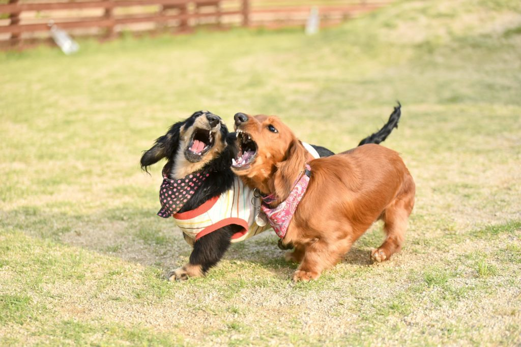愛犬の吠えに悩んでいる私がその解決法を教えます
