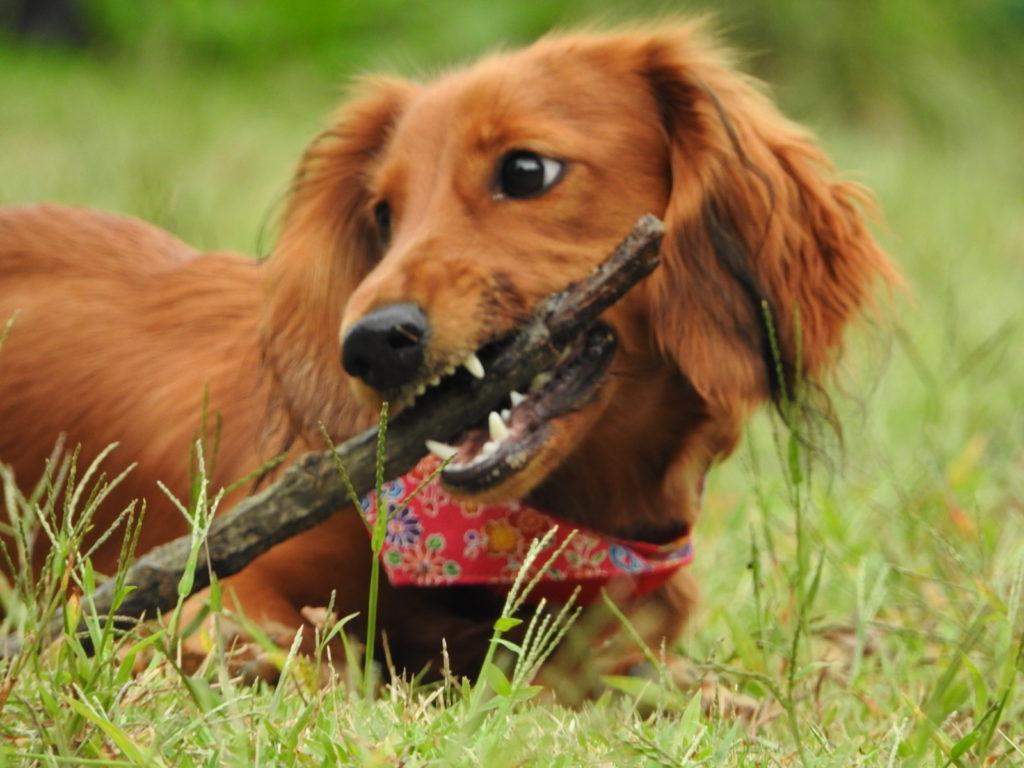 春に気をつけたい愛犬の病気・トラブルについて考えてみます