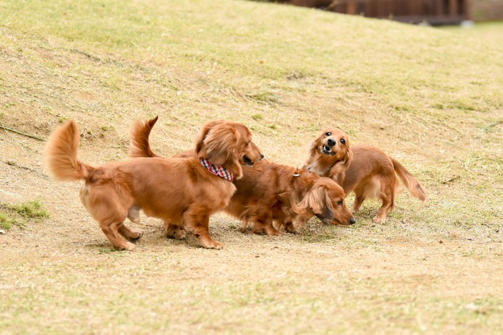 【犬種別】体質ランキング-健康管理に役立ちます-