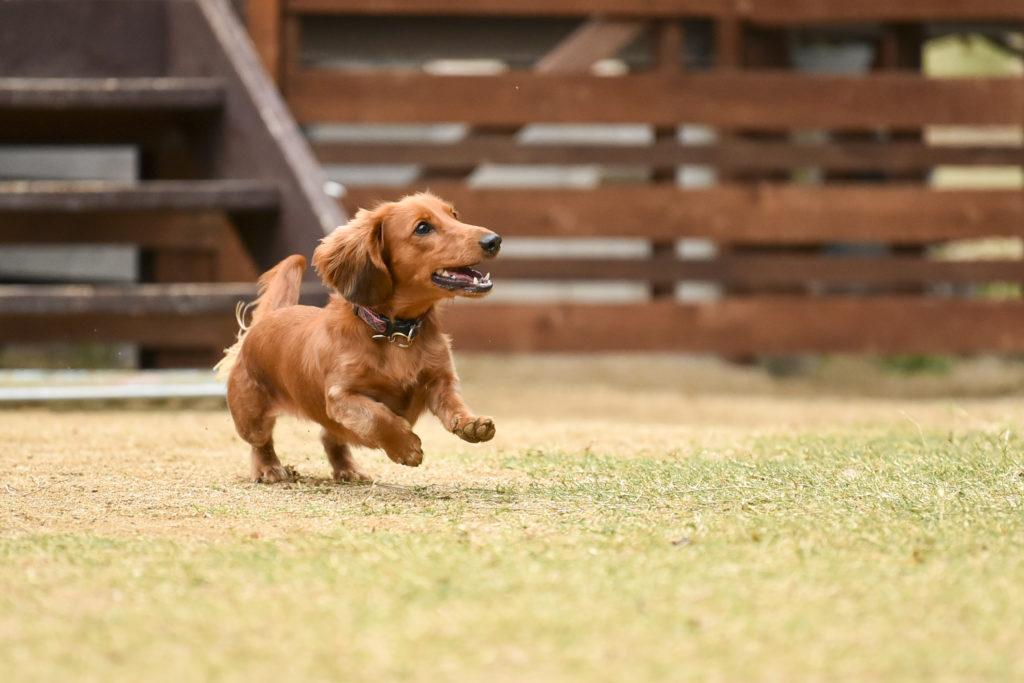 【犬種別】得意なことランキング -関係アップに役立ちます-