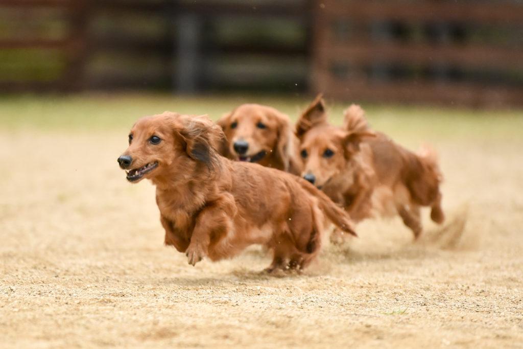 【犬種別】困りごとしつけランキング -接し方に役立ちます-