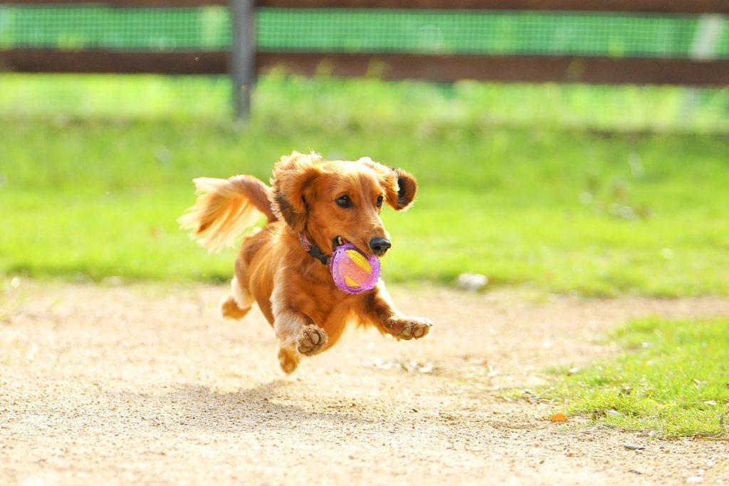 【空飛ぶわんこ】あなたの愛犬をプロカメラマンに撮影してもらいませんか