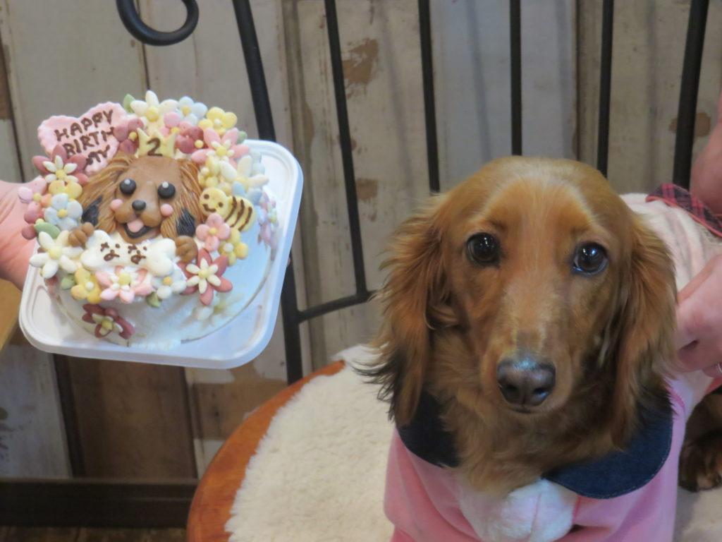 愛犬の似顔絵入りのわんこケーキでお祝いしませんか?  なな2歳の誕生日会