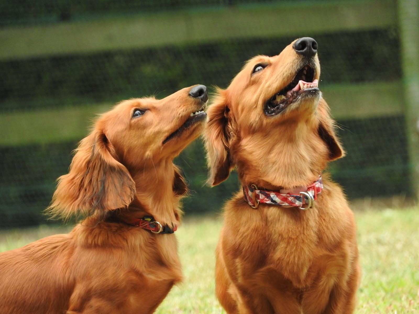 【不思議】狂犬病発症確認の第一報配信がいったん削除された理由